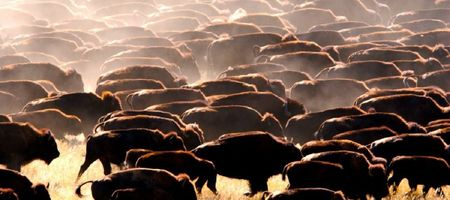 Turn the herd on its head